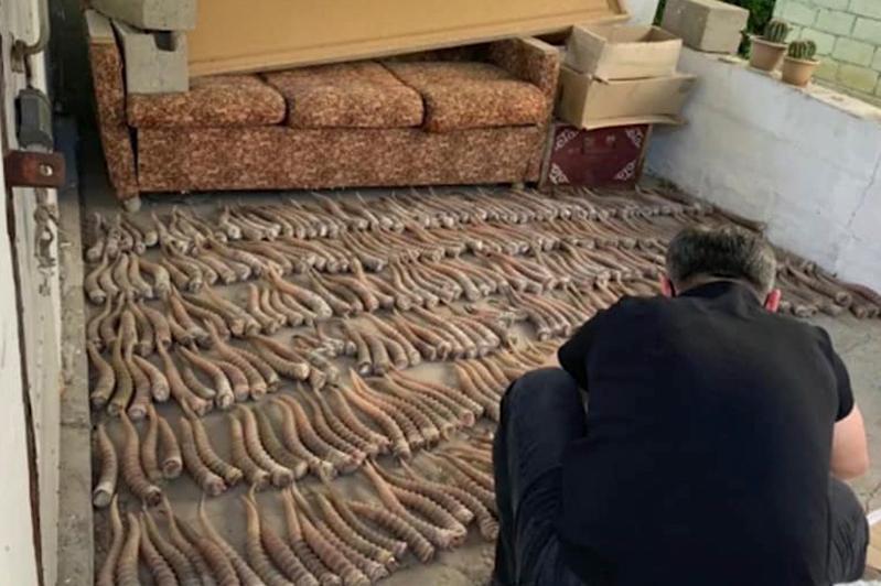 БҚО-да 400-ден аса киік мүйізін алып бара жатқан браконьерлер ұсталды