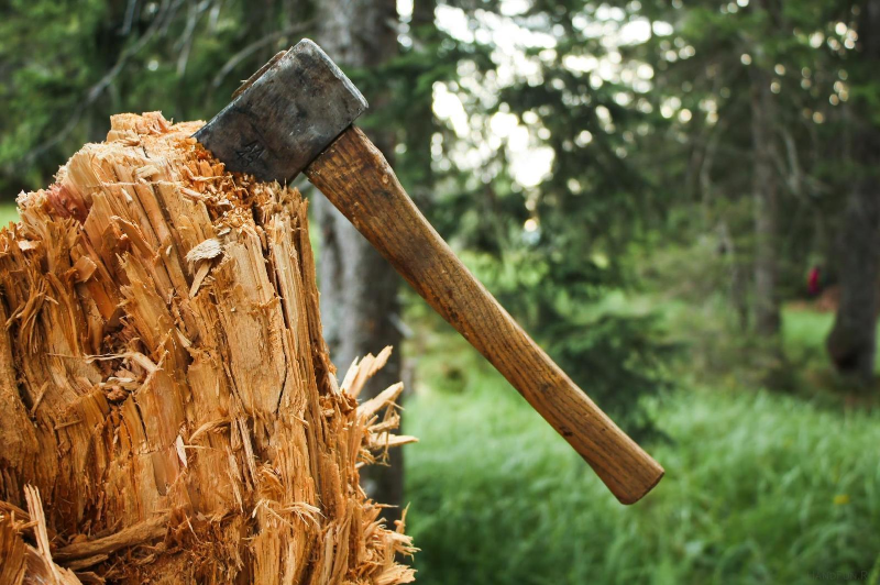 В Алматы сотрудник управления зеленой экономики содействовал нарушителям в вырубке деревьев
