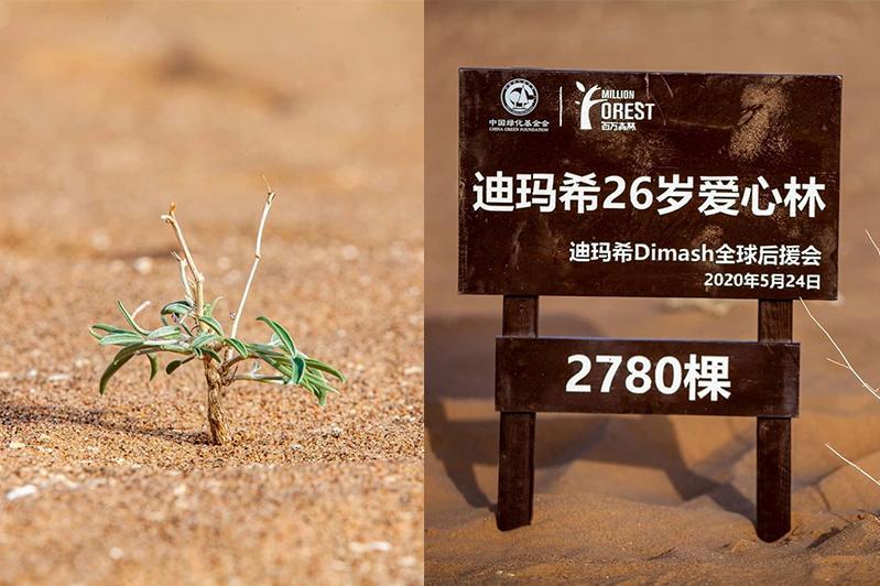 迪玛希中国粉丝为庆祝歌手生日在沙漠种下近3千棵树