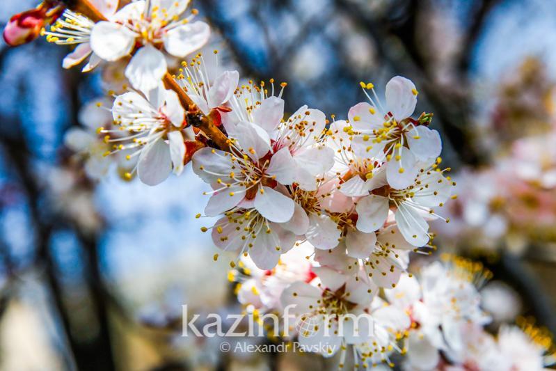 Погода без осадков ожидается 24 мая в Казахстане