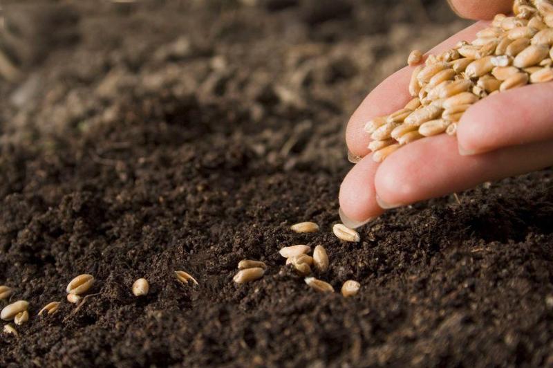Более 2,5 млн семян заготовили для посевной кампании 2020 года