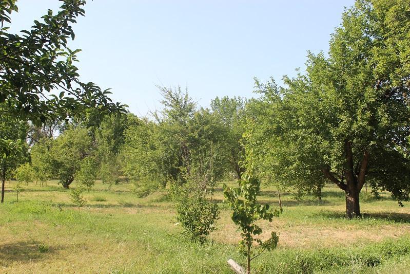 Насколько расширится «зеленый пояс» столицы