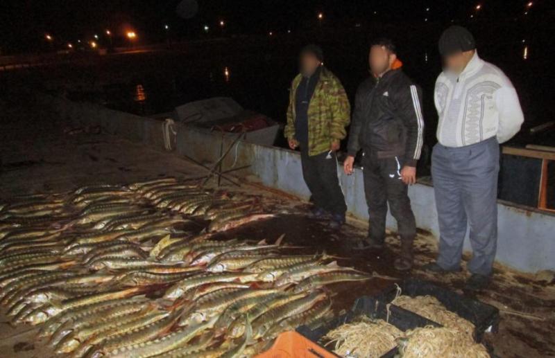 哈俄两国在里海联合开展打击非法捕鱼行为的专项行动