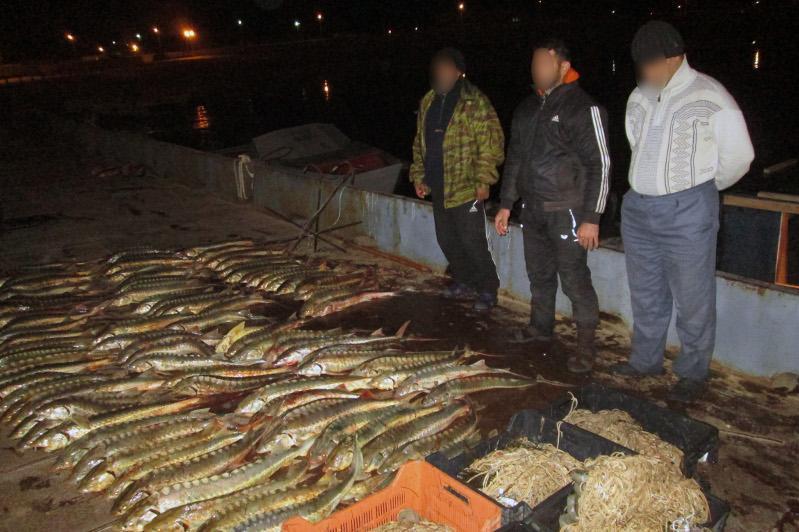 1 млрд теңге залал: Каспий теңізінде браконьерлер ұсталды