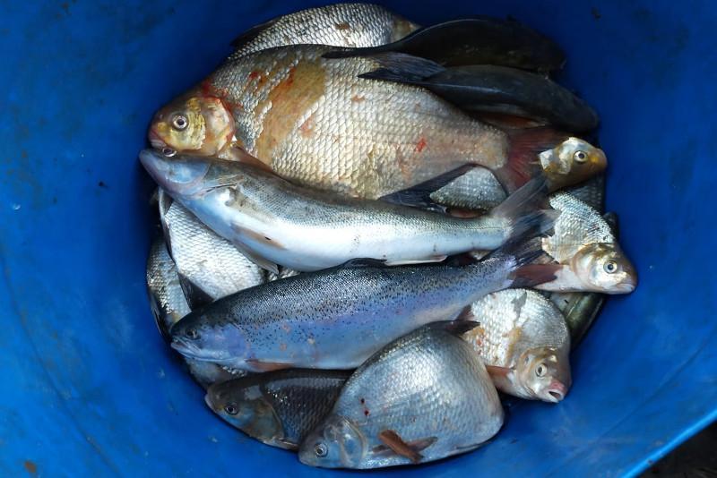 Редкую рыбу изъяли у жителей Семея