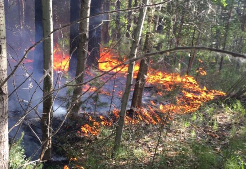 Лесной пожар произошел в ВКО