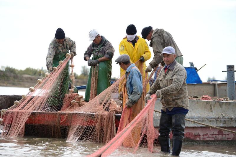 Сколько тонн рыбы выловили в весеннюю путину в Атырау
