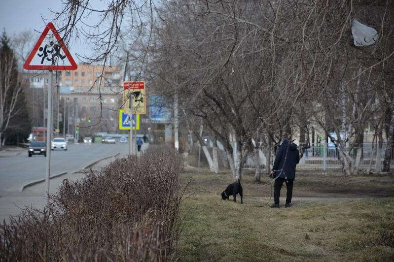 Выбросившую собаку из окна женщину осудили в Петропавловске
