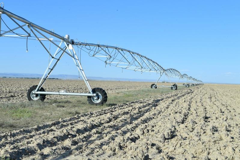 Применяемым туркестанскими аграриями методом дождевального полива интересуются соседние регионы