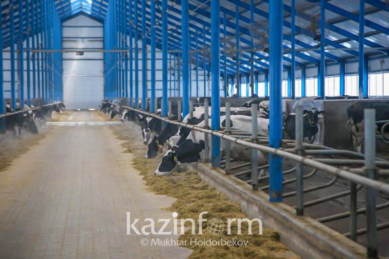 Қостанай облысында 381 цифрлық ферма құрылады