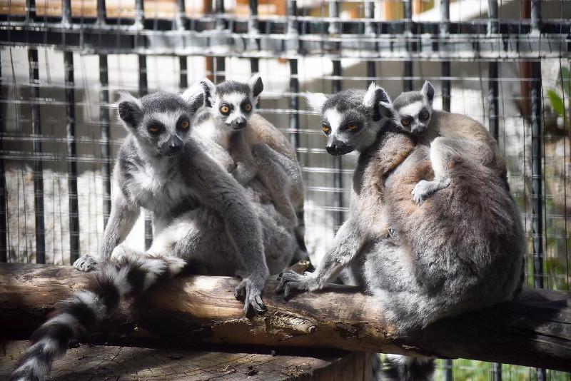 Зоопарк Алматы откроется 6 июня с пополнением и новыми правилами для посетителей