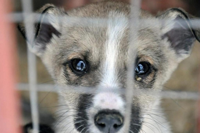 Усилить ответственность за жестокое обращение с животными могут в Казахстане