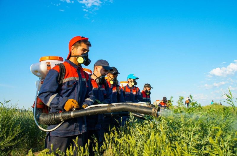 В Нур-Султане проводится дезинсекция против комаров, мошек и других насекомых