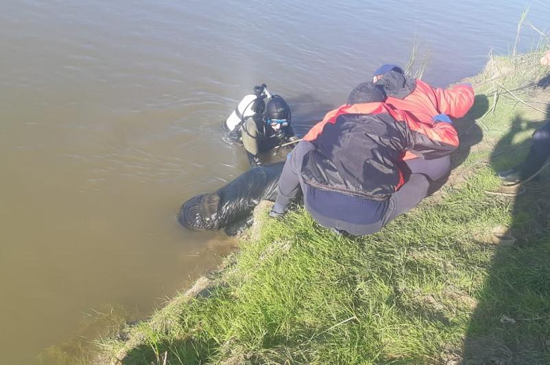 Мужчина утонул, спасая девушку, в Акмолинской области