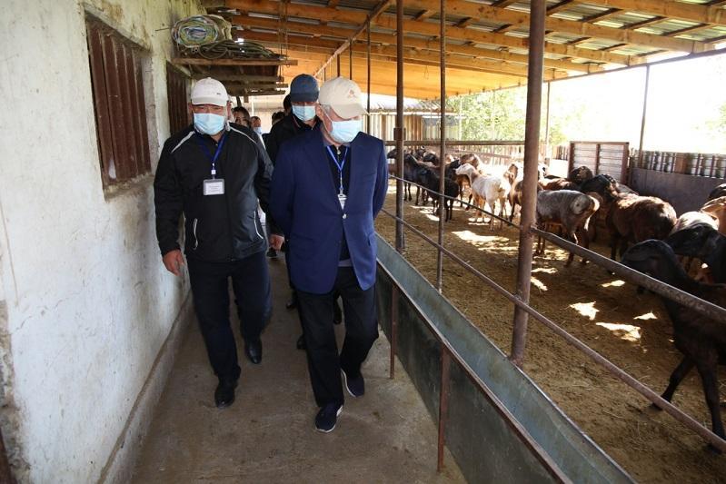 Подсобные хозяйства сельчан развивают в Жамбылской области