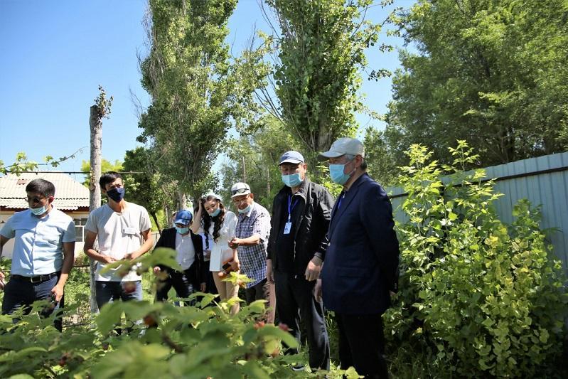 Заняться ягодным бизнесом советует сельчанам Бердибек Сапарбаев