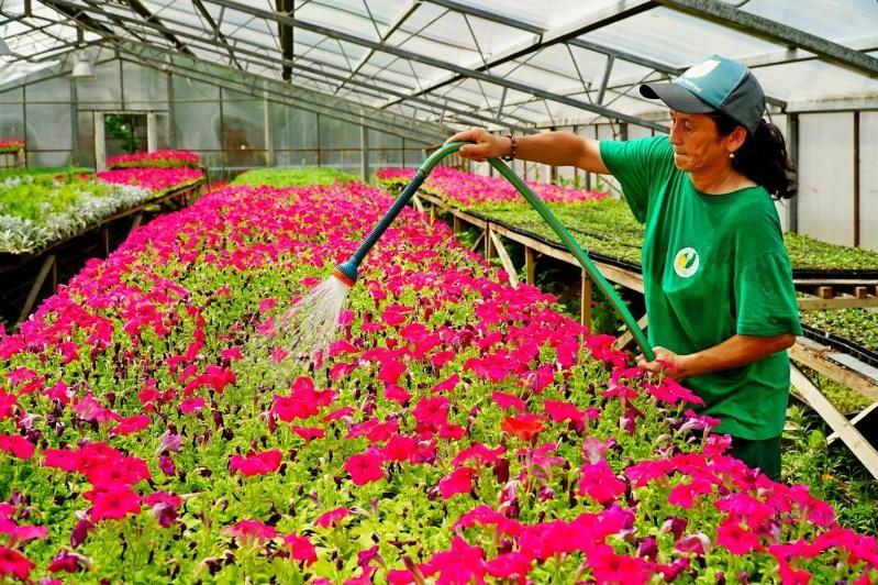 Масштабные работы по озеленению города продолжаются в Нур-Султане