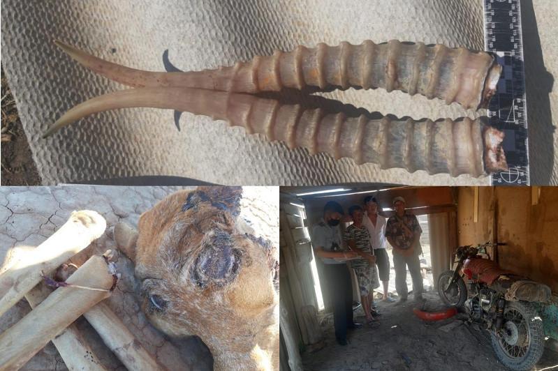 Охотившегося на сайгака браконьера задержали в Атырау