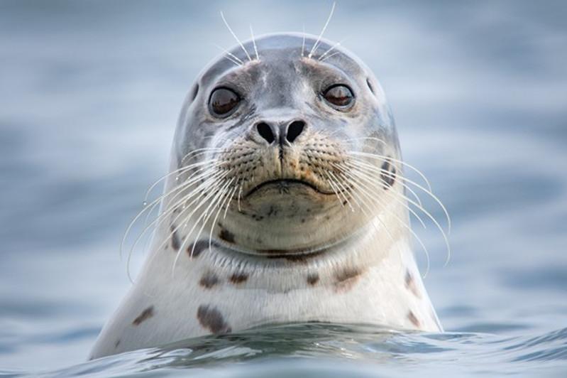 За жестокое обращение с тюленем накажут людей в Мангистауской области