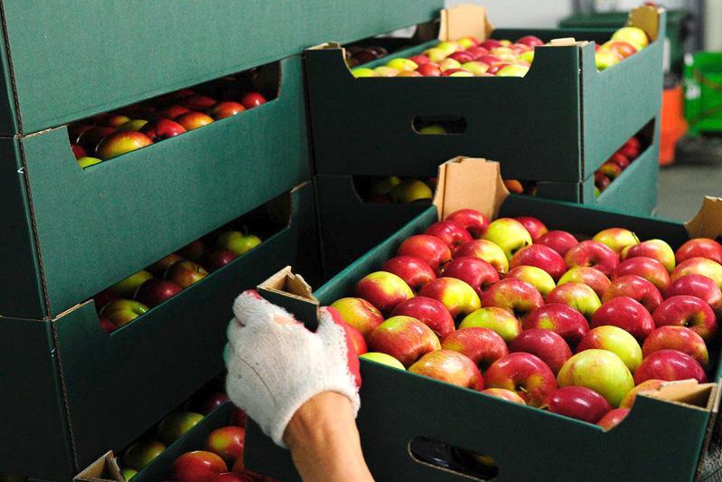 Груз овощей и фруктов на $5 млн везли в Казахстан, в пять раз занизив таможенную стоимость