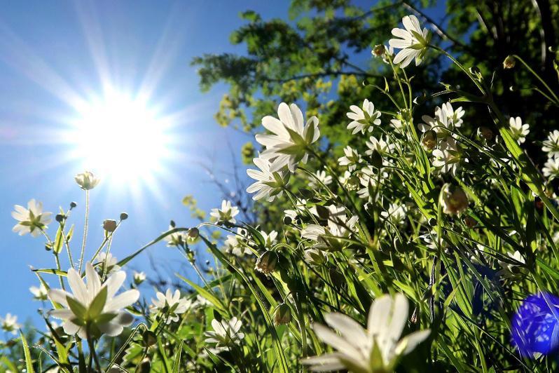 Прогноз погоды на ближайшие три дня в Казахстане дали синоптики