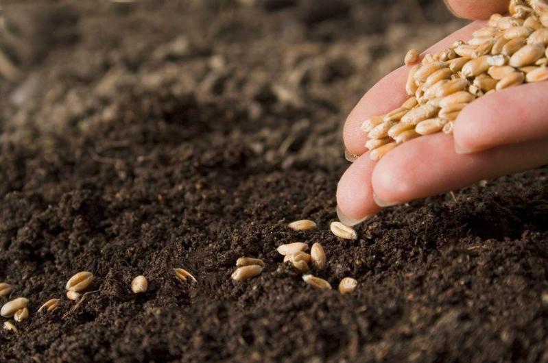 Фермеры обеспечены качественными семенами и ГСМ, несмотря на пандемию - Минсельхоз РК