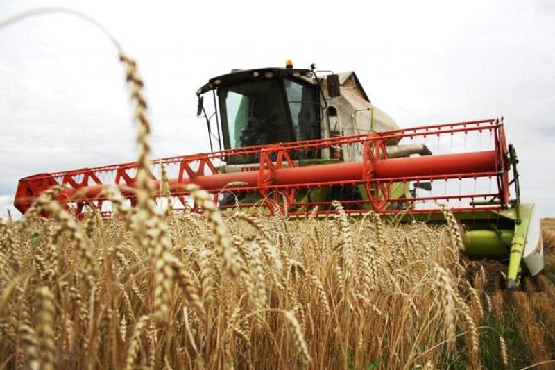 哈萨克斯坦南部地区开展粮食收割工作