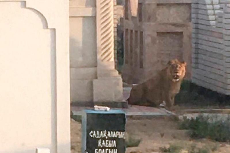 Владельцу льва вынесен приговор в Актау