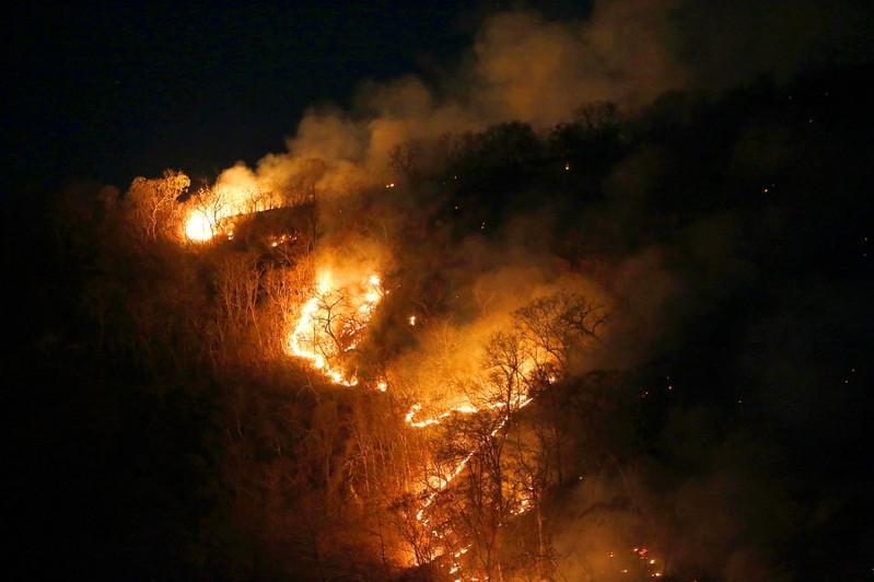 Brazilian Amazon registers record deforestation in June