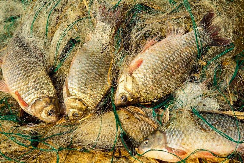 Почти 90 кг белого амура и сазана незаконно выловили рыбаки в Алматинской области