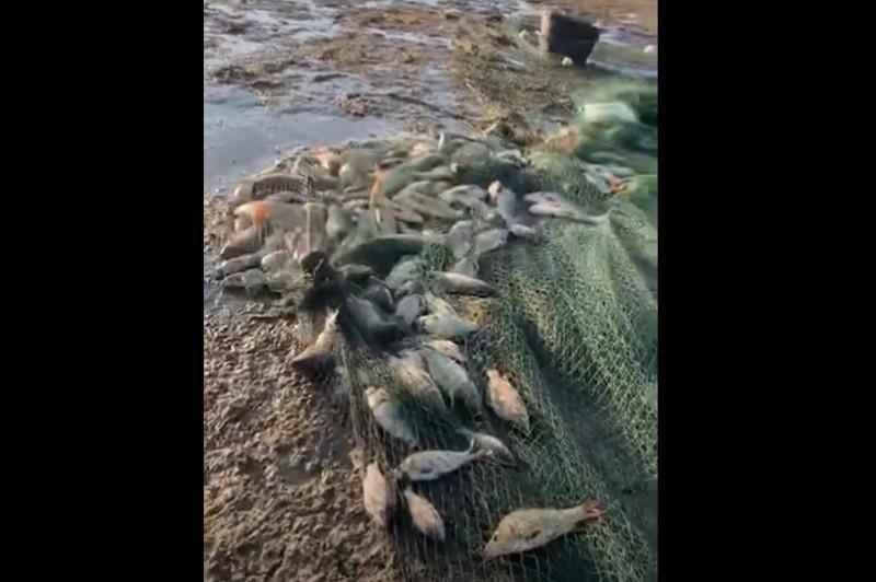 Алматы облысы 80 метрлік аумен балық аулаған браконьерлер ұсталды