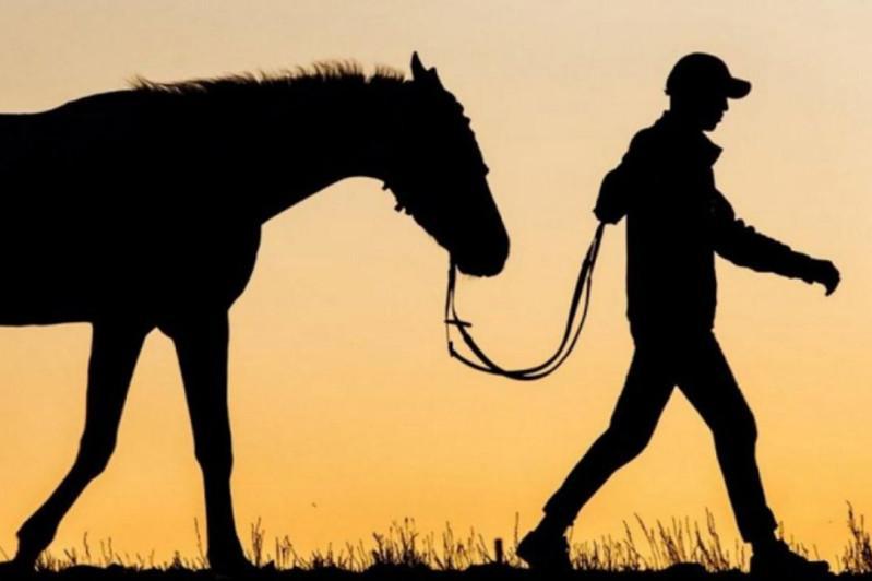 Пастухов-скотокрадов задержали в Жамбылской области