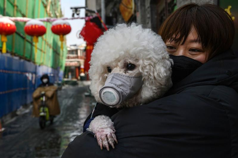 2 dogs test positive, marking Japan's 1st reported pet infections