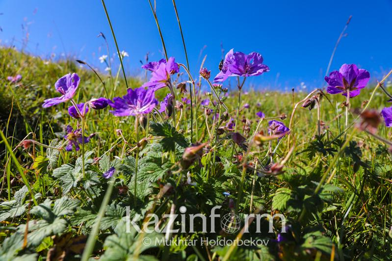 Most regions of Kazakhstan to experience no precipitation on Aug 4