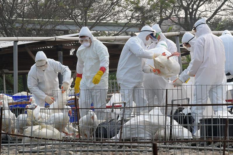 俄境内现禽流感病毒 哈萨克斯坦在哈俄边境实施限制措施