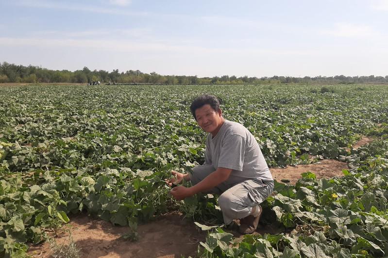 На плантациях Уральска трудятся около 300 приезжих работников
