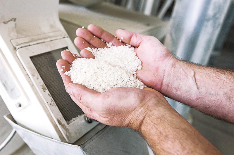 上半年哈萨克斯坦稻米产量显著增长