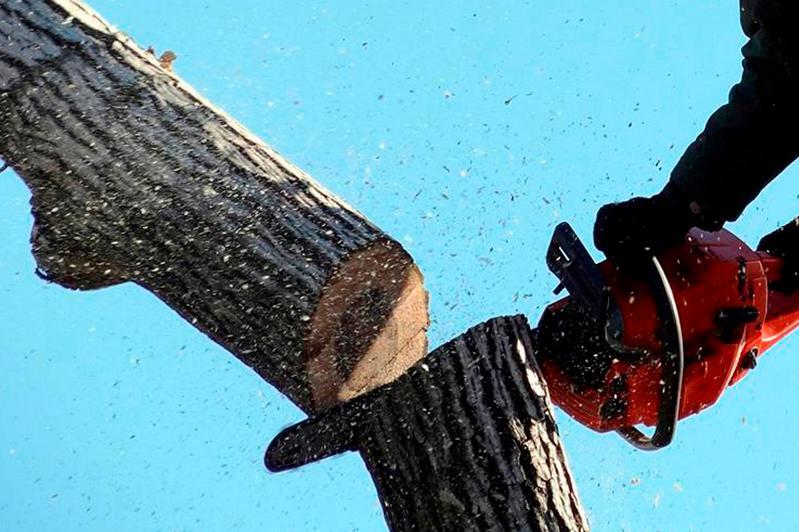 Вопрос по незаконному сносу деревьев подняли в Алматы