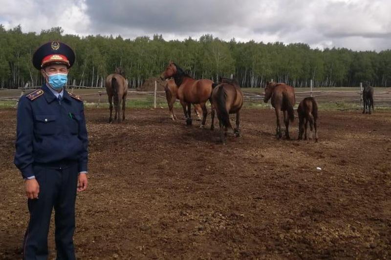 Штрафстоянки для скота работают в СКО
