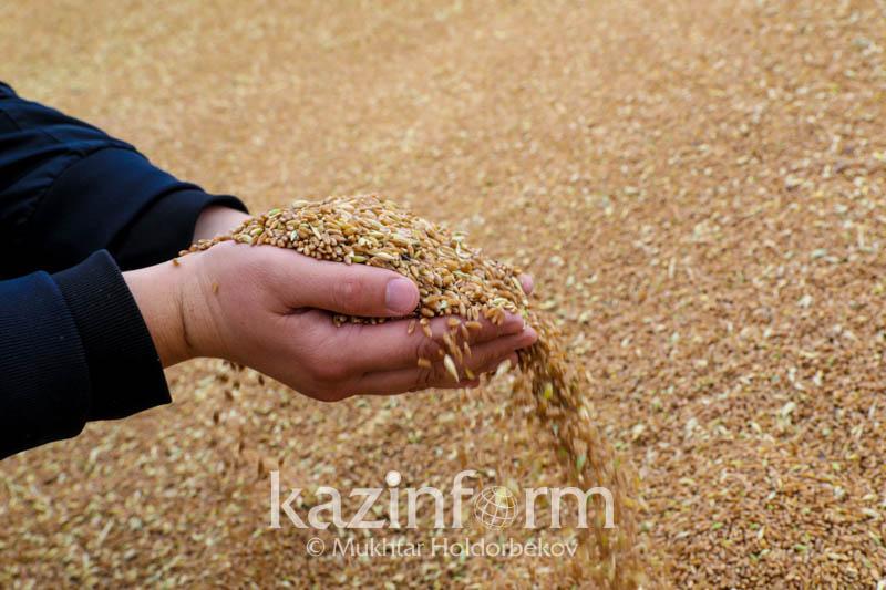 Более семи млн тонн зерновых и зернобобовых намолоченов Казахстане