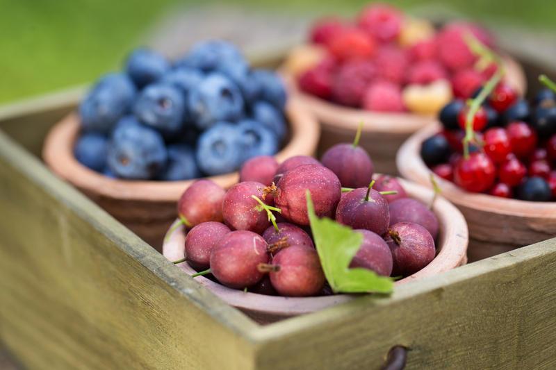 哈萨克斯坦研发出检测水果和浆果作物病毒的新系统