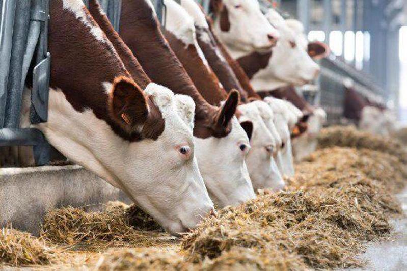 129 мясных и молочных ферм откроются до конца года в Акмолинской области