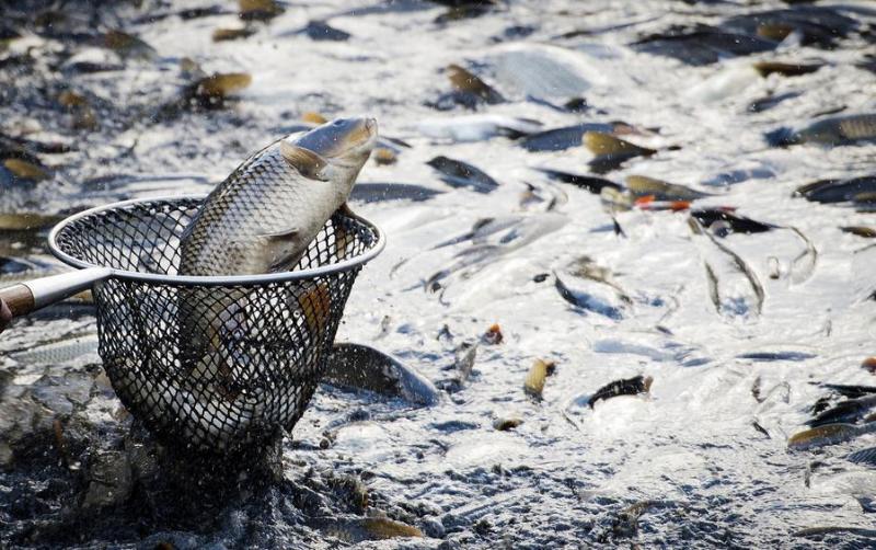Завод по производству рыбы в закрытых водоемах запустят в Актобе