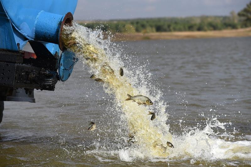 Свыше двух тысяч рыб спасены из высыхающего водоема в ВКО