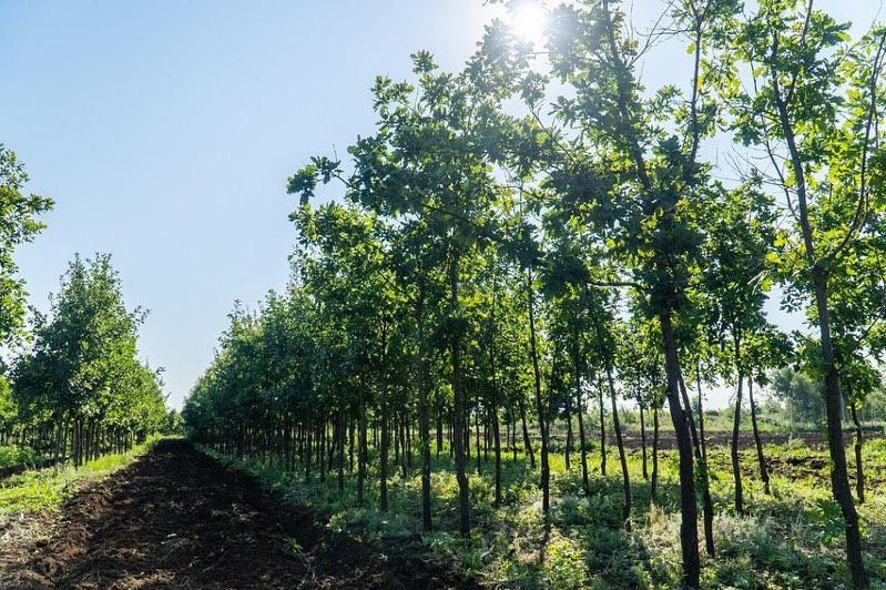 Астананың жасыл белдеуінде 10 млн ағаш пен 1,8 млн бұта өсіп-өніп жатыр