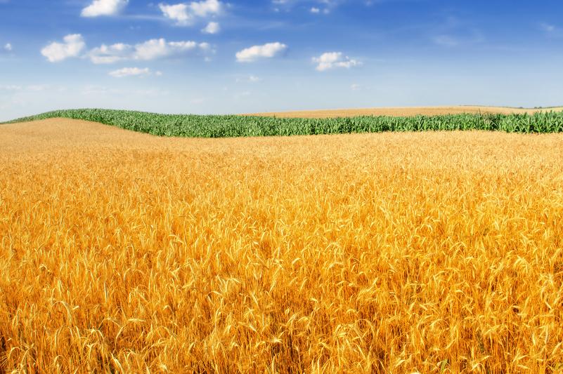 Современный комплекс по сушке и очистке семян появился в Бухар-Жырауском районе Карагандинской области