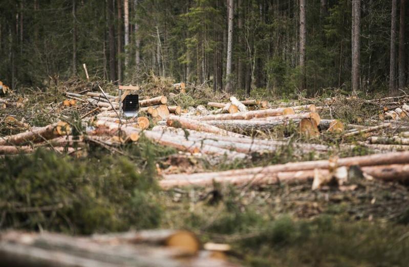 粮农组织:过去20年全球森林覆盖面积减少近1亿公顷