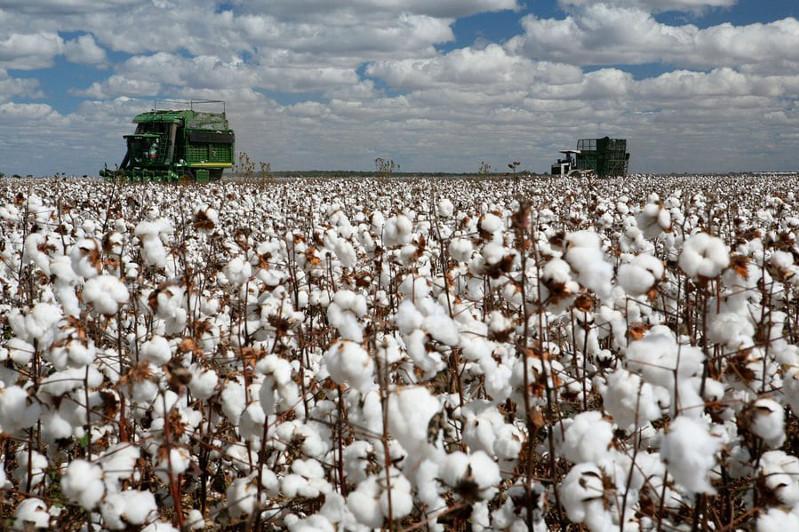 突厥斯坦州启动棉花收获工作