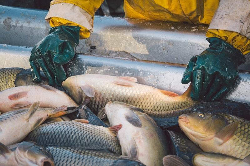 Перспективные для ведения рыбного хозяйства водоемы определят в Карагандинской области