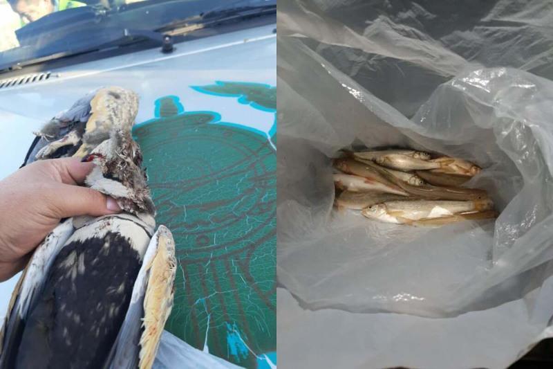Краснокнижные птицы и рыба убиты браконьерами в Алматинской области